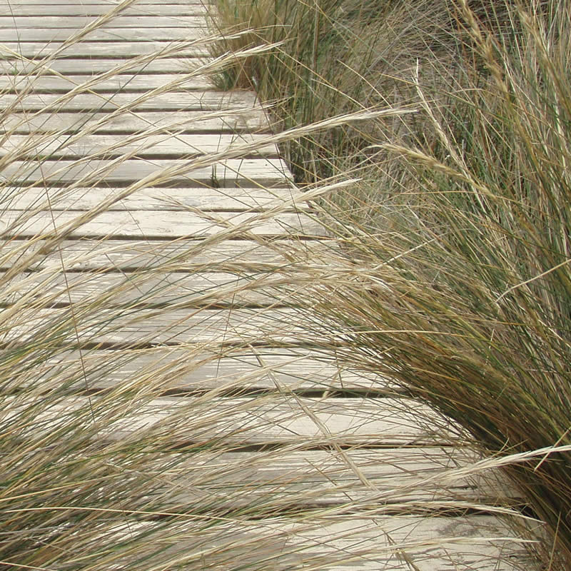 Juncus along pathway, Windermere. Image: Derwent Estuary Program.